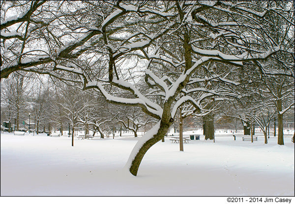 Snow Trees In Big Spring Park in 2011